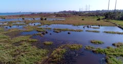 Aerial footage of grass field scattered with pond of water and some ducks over them and white heron flying next to the sea, a few building are on the beach. The camera is going over the field while panning.