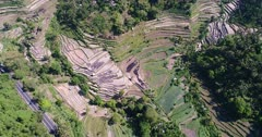 Aerial footage of rice paddies in terraces on the side of hills with tropical forest around and road passing nearby. The camera is going backward over the fields while tilting up.