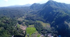 Aerial footage of rice paddies at various stages in terraces on the side of hills with tropical forest around and road passing nearby. The camera is going backward over the fields.