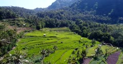 Aerial footage of rice paddies at various stages from just harvested to bright green ones at the bottom of hills covered in tropical forest, road passing in the middle. The camera is going backward over the fields while panning.
