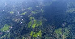 Aerial footage of bright green rice paddies growing in the middle of hills covered in tropical vegetation. The camera is going backward over the fields.