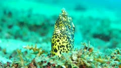 Snake Eel out of its sand home Retreated into sand
