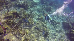 Many fish blue trevally hunting behavior