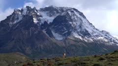 Guanaco with mountain in background