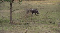 Waterbuck and Warthog