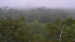 Misty rainforest from canopy top