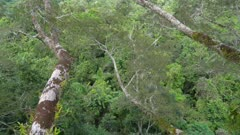 Pan up rainforest canopy top to sky