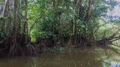 Slow cruise up a jungle river
