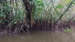 Canoe through flooded jungle forest
