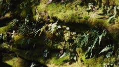 Zhangjiajie Mountain moss and ferns