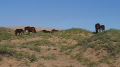 Horses with gobi desert dunes in background