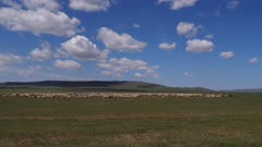 Herd of Sheep on the open Steppes