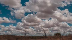 Time Lapse of clouds moving over African savanah
