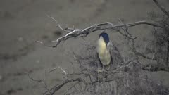 Seabird in tree on the Patagonia Atlantic shore
