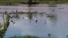 Birds in Florida wetlands at sunset