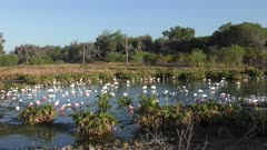 Birds in spring time in Florida wetlands