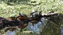 turtles basking on a log