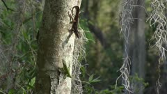 Two common Lizards on a tree