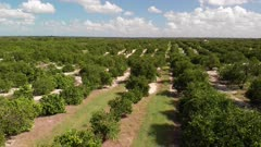 aerial view of orange grove in Florida
