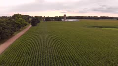 Aerial view of corn fields in a countryside at sunset. summer country landscape.