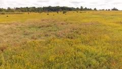 Autumn colorful meadow with grass and yellow flowers. Aerial landscape
