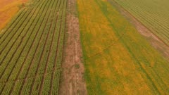 Aerial view of colorful autumn fields. Top view.
