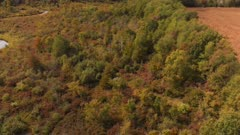 Aerial view of colorful autumn trees. Colorful fall landscape.