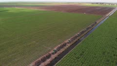 Sugar cane fields with tractors in Florida. Aerial view.