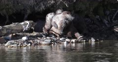 an otter family plays near their den
