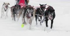 dog sled racing / sled dogs / slow motion