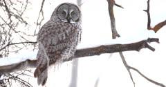 Owls & Cranes
