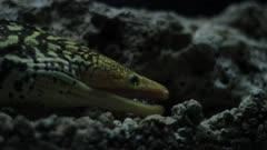 Moray eel in the Mediterranean