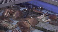 Seafood on display at a fishmonger market in southern France