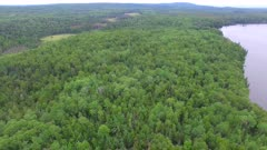 Boreal Forest in Summer, Minnesota Northern Hardwoods and Pines, Small Lake