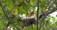 Porcupine in Tree, Watching With One Eye On Camera