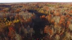 Travel Over Fall Colors, Oaks, Tamaracks, Pines
