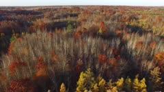 Fall Colors, Oaks, Tamaracks, Pines, Pan Down to Tamarack Forest