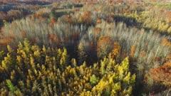 Fall Colors, Oaks, Tamaracks, Pines, Camera Backing Away