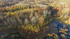 Travelling Toward Woodland, Fall Colors, Oaks, Tamaracks, Pines