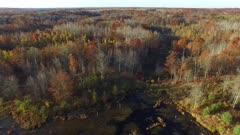 Travel Across Marsh, Fall Colors, Oaks, Tamaracks, Pines
