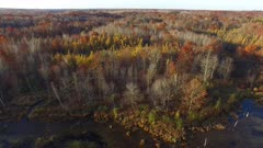 Backing Away, Marsh, Wetland, Fall Colors, Oaks, Tamaracks, Pines.