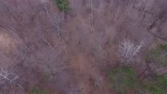 Early Spring, Mixed Deciduous Hardwoods and Evergreens