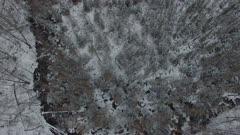 Black Spruce and Tamarack Marsh, Deer Trails, Early Spring Snowfall