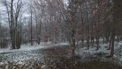 Early Spring, Deciduous Hardwoods, Light Snow on Ground, Descent Toward Ground