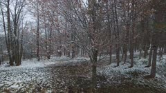 Ascend Up Over Early Spring Deciduous Hardwoods, Light Snow on Ground