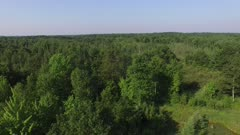 Deciduous Woods, Summer Growth, Backing Away at Treetop Level Into Marsh Area