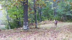 White-tailed Deer Enters, Running Quickly Through Woods