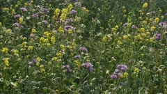 hold + pan Field edge with wild flowers.  Sowing diverse weed flora alongside field edges, provides opportunities for insects, birds and other small animals.