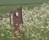 rusty country gate between blooming cow parsley (Anthriscus sylvestris)