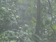 mist cloud in rain forest + leaves